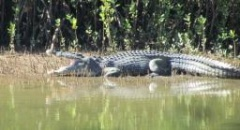 Big Brutus Bloomfield Croc highlights nature hotspot