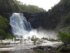 Wujal (Bloomfield) Falls flowing with green season